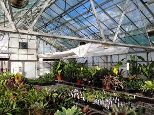 Royal Botanic Garden Glasshouse