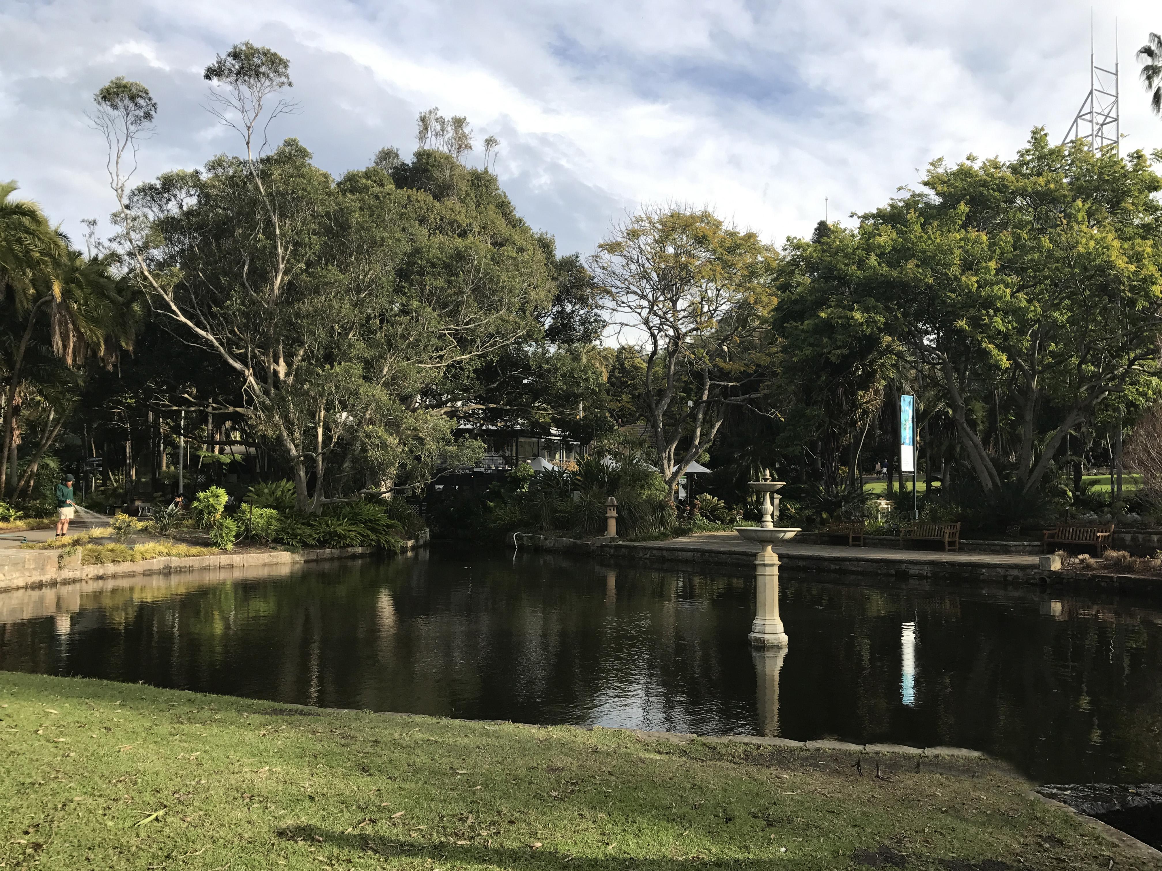The Royal Botanic Garden Sydney Lotus Pond Rejuvenation